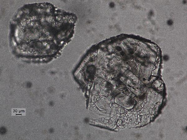 twin_fldsp_inclusions_pp-600.jpg